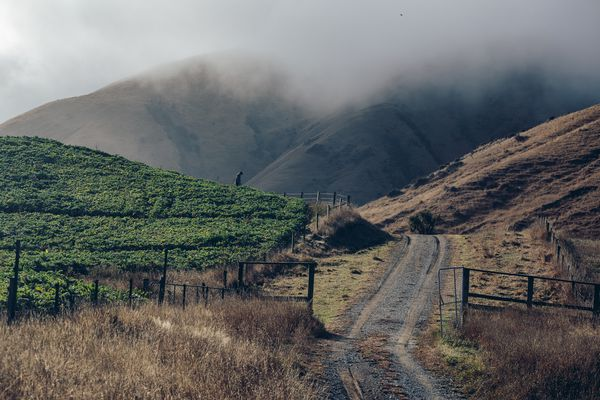 Sea fog at this Kekerengu Coast vineyard.
