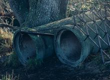 Pipes under the oak tree.