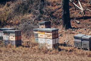 Beehives at Little Oasis vineyard.