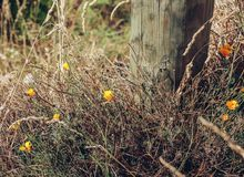 A fence post and wild flowers.