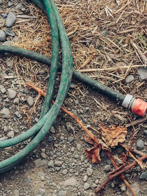 A hose and old grape prunings.