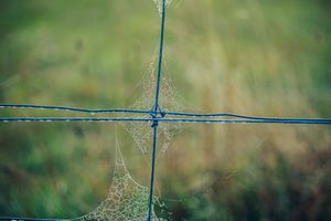 A spiderweb on a fence.