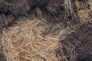 Hay in the compost.