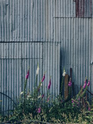 The farm shed and flowers at Wrekin vineyard.